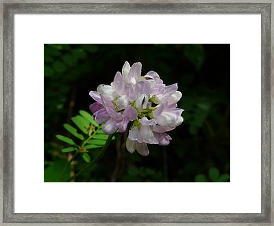 Mauve Flower Framed Print by Valerie Ornstein