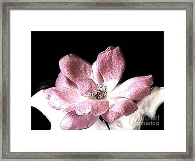 Mauve Rose Framed Print by Marsha Heiken