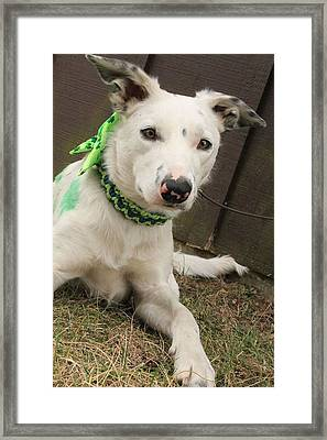 Max In March Framed Print