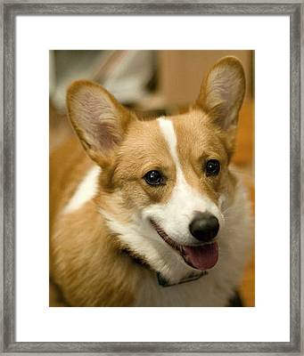 Max Framed Print by Laurie With