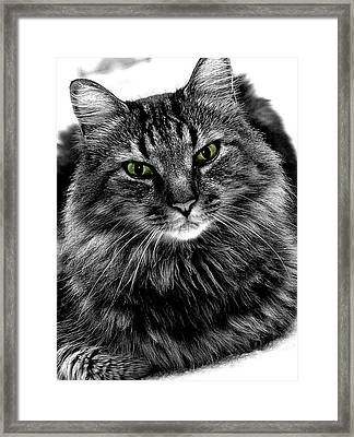 MAX Framed Print by Michael Shreves