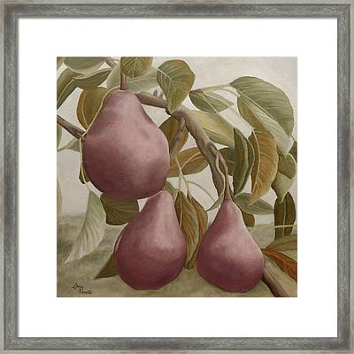 Max Red Bartlett Pears Framed Print