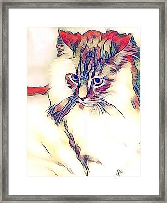 Max The Cat Framed Print