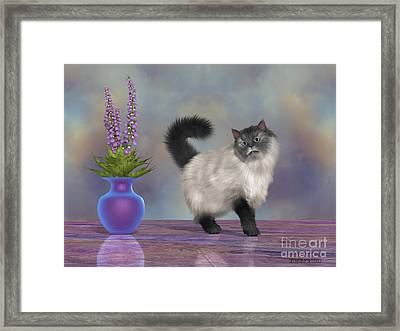 Max The House Cat Framed Print by Corey Ford