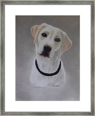 Maxie Framed Print by Janice M Booth