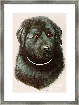 Framed Print featuring the painting Maximillan And His Diamond Collar. by DiDi Higginbotham