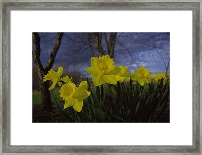 May Bouquet 1 Framed Print by The Stone Age