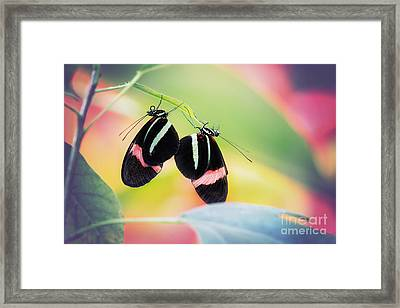 May I Have This Dance? Framed Print