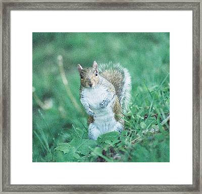 May I Help You.... Framed Print