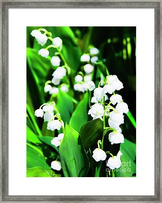 Lily-of-the-valley Framed Print by Nat Air Craft
