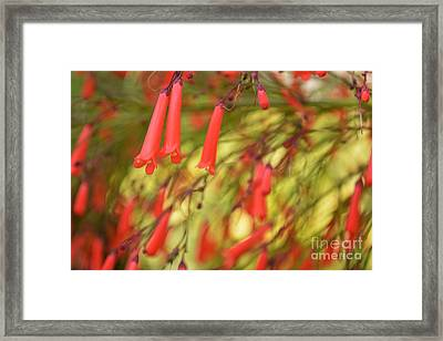 May The Light Lead You The Way Framed Print