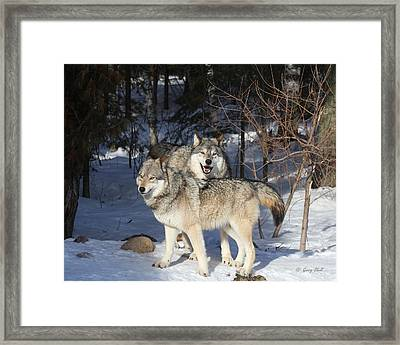 Maya And Grizzer Framed Print