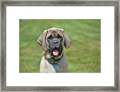 Maya The Magnificent Mastiff Framed Print by Susie Fisher