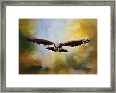 Maybe - Hawk Art Framed Print