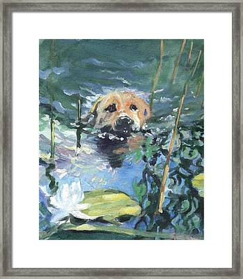 Maybe I'll Find A Frog Framed Print