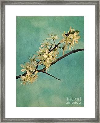 Mayblossom Framed Print by Priska Wettstein