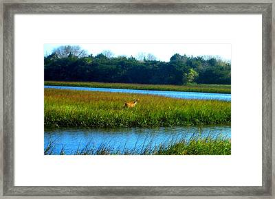Mayport Jetty Buck 2 Framed Print by Deb Campbell