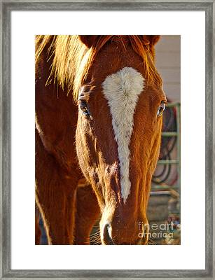 Mccool, Grandson Of Secretariat Framed Print