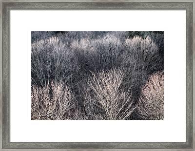 Mcdade Vii Framed Print by Dawn J Benko