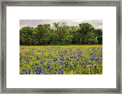Mckinney Falls Bloom Framed Print