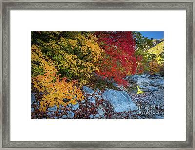 Mckittrick Autumn Framed Print by Inge Johnsson