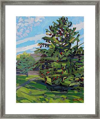 Mcmichael Spruce Framed Print by Phil Chadwick