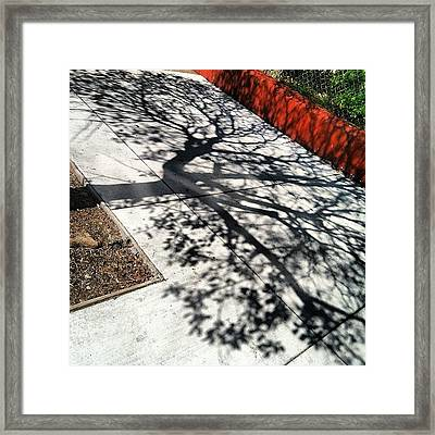 Me And My Shadow Framed Print by Courtney Haile