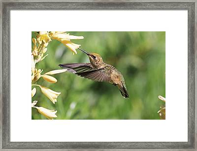 Me And My Shadow Framed Print by Donna Kennedy
