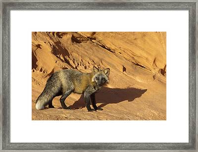 Me And My Shadow Framed Print by Sandra Bronstein