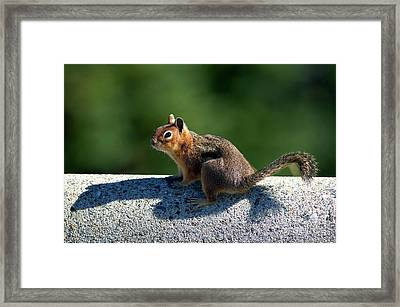 Framed Print featuring the photograph Me And My Shadow by Sharon Talson