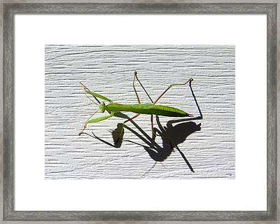 Me And My Shadow Framed Print by Will Borden