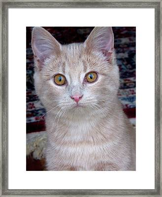 Me- No, It Was The Dog Framed Print