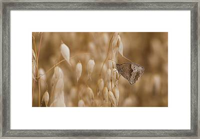 Meadow Brown Roosting Framed Print