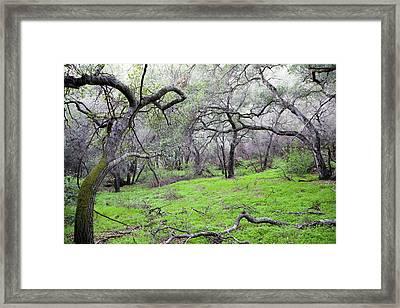 Meadow Framed Print by Gilbert Artiaga