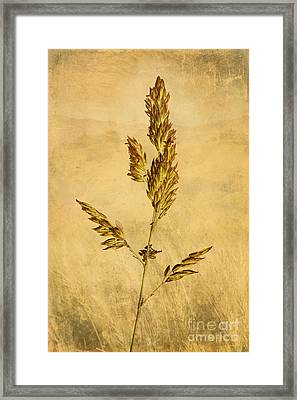 Meadow Grass Framed Print by John Edwards