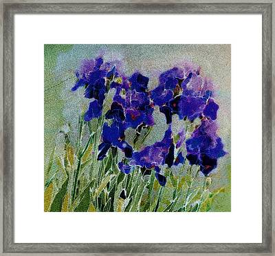 Framed Print featuring the photograph Meadow Iris by Linde Townsend