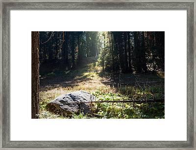 Meadow Framed Print By Kimberly Valentine