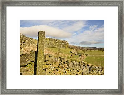 Meadow Land Single File Framed Print by Nichola Denny