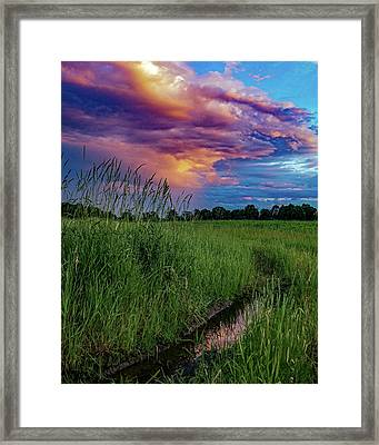Framed Print featuring the photograph Meadow Lark by Kendall McKernon