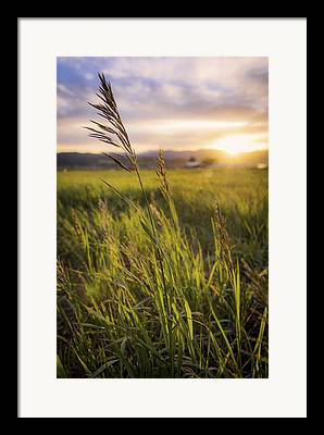 Grass Photographs Framed Prints