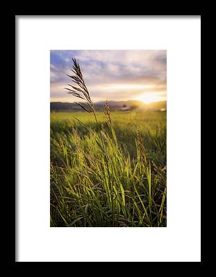 Grass Framed Prints