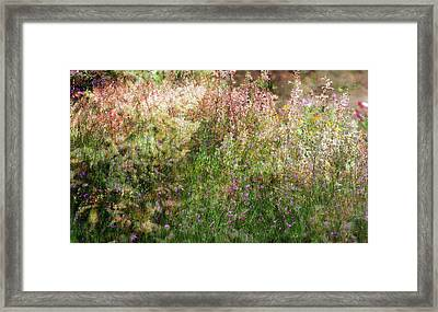 Meadow Framed Print by Linde Townsend