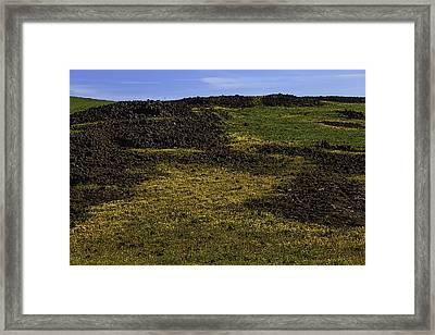 Meadow Of Golden Flowers Framed Print