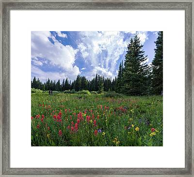 Meadow Of Indian Paintbrush, Alpine Aster And Alpine Daisy In Th Framed Print