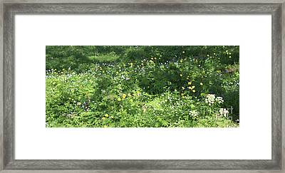 Meadow With Spring Flowers Framed Print