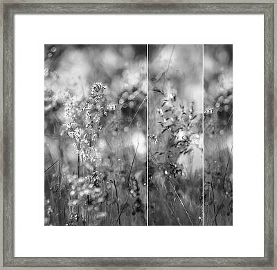 Meadowgrasses Framed Print