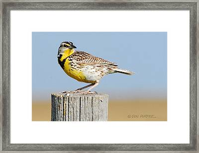 Framed Print featuring the photograph Meadowlark 1 by Don Durfee