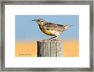 Framed Print featuring the photograph Meadowlark 2 by Don Durfee