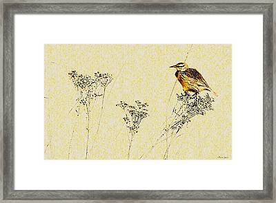 Meadowlark In Kansas Prairie 1 Framed Print