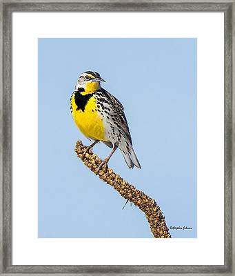 Meadowlark On Mullein Stalk Framed Print